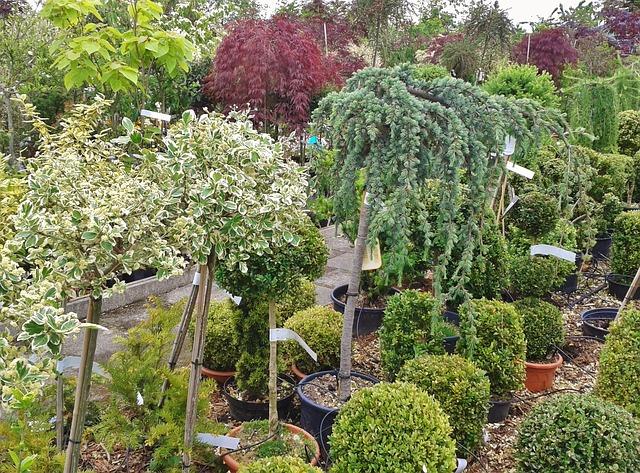 Montar un vivero de plantas mantenimiento de jardines for Que es un vivero de plantas