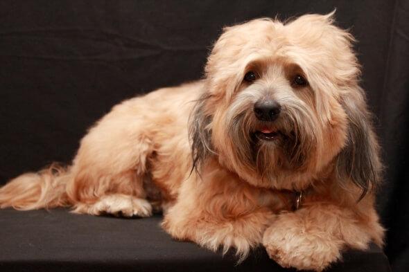 7 ideas de negocios que tienen que ver con las mascotas