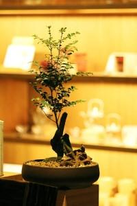 Montar una Tienda de Bonsai