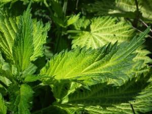 Cómo montar un negocio de herbalife