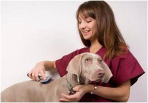 agencia de cuidado de mascotas