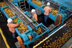 montar una fábrica de jugo de naranja