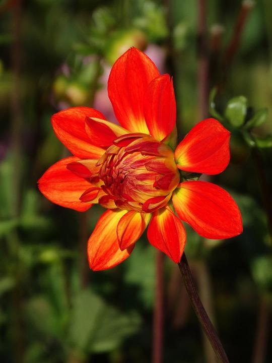 Armar un servicio de jardiner a a domicilio belleza de for Servicio de jardineria